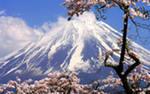 Японская елка из чистого золота.  Новогоднее авто-путешествие по Японии (видео репортаж).